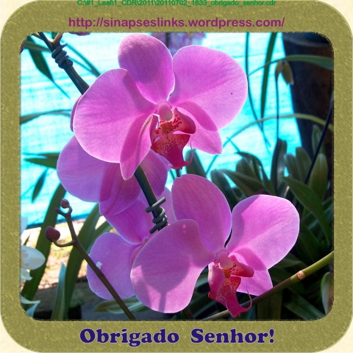 20110702_1833_obrigado_senhor