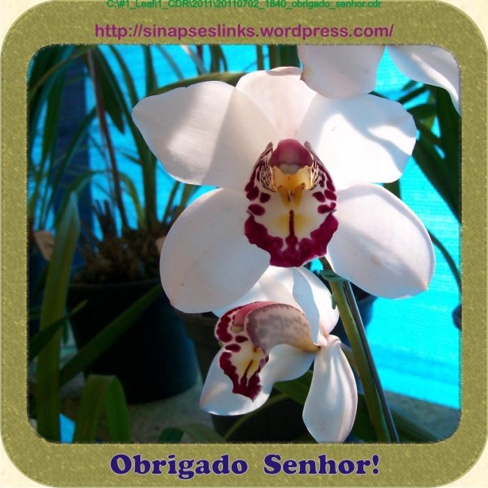 20110702_1840_obrigado_senhor