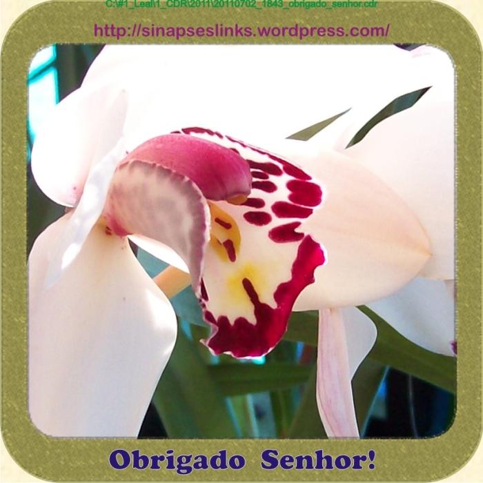 20110702_1843_obrigado_senhor