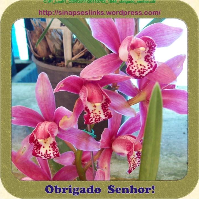 20110702_1844_obrigado_senhor