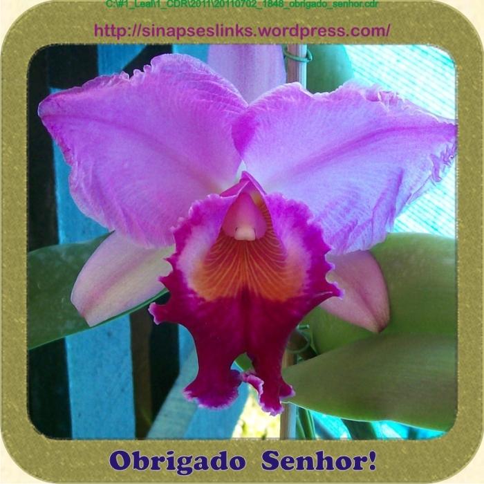 20110702_1848_obrigado_senhor