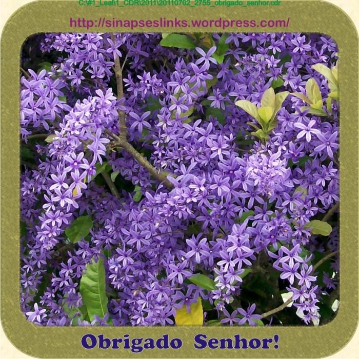 20110702_2755_obrigado_senhor