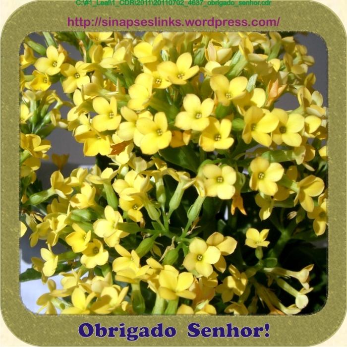 20110702_4637_obrigado_senhor