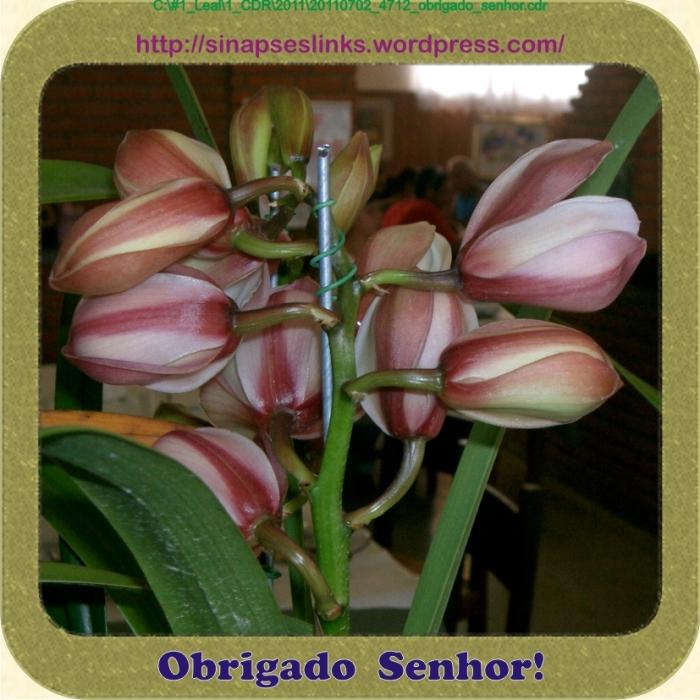 20110702_4712_obrigado_senhor