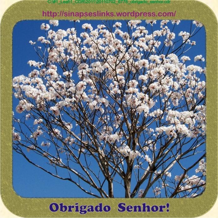 20110702_6778_obrigado_senhor