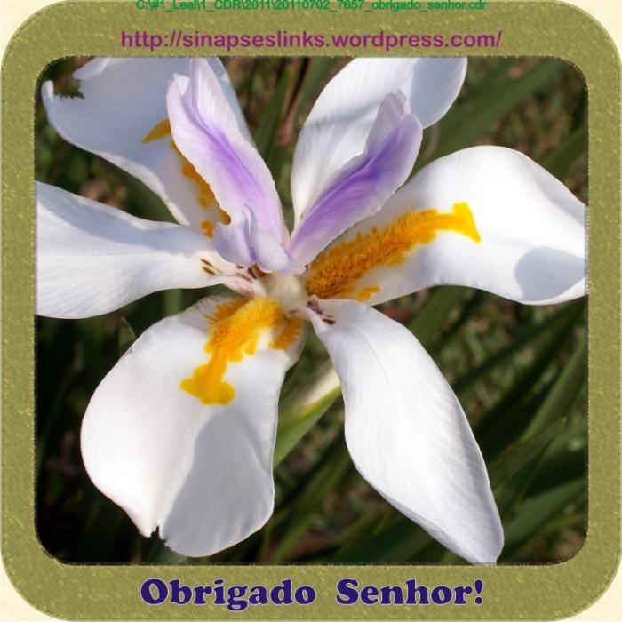 20110702_7657_obrigado_senhor