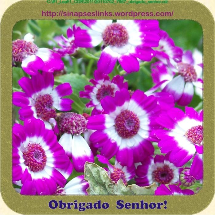 20110702_7867_obrigado_senhor