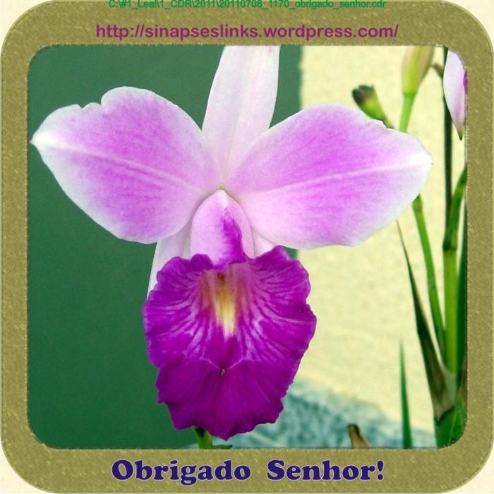 20110708_1170_obrigado_senhor