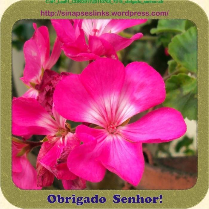 20110708_7218_obrigado_senhor