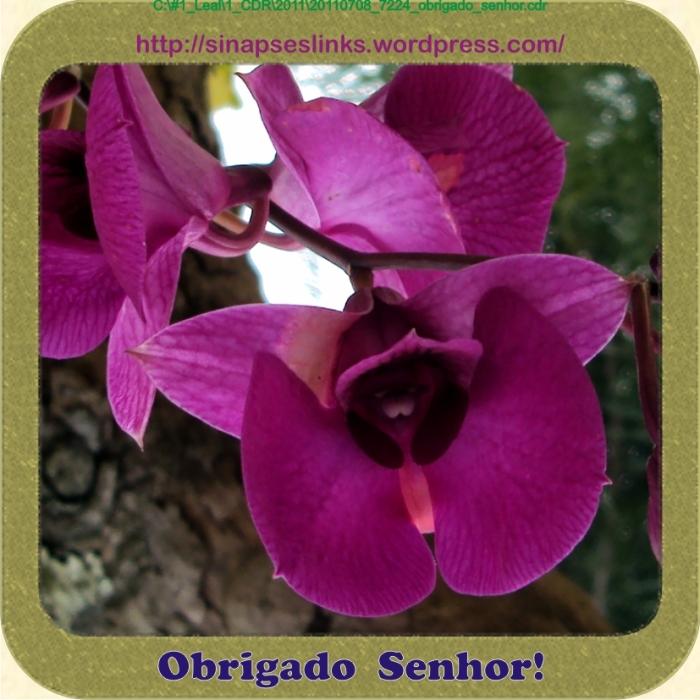 20110708_7224_obrigado_senhor