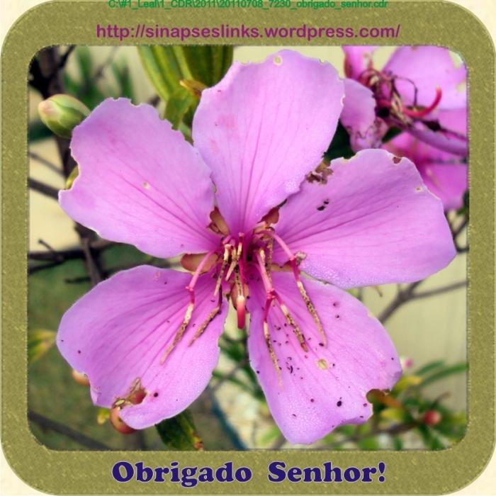20110708_7230_obrigado_senhor