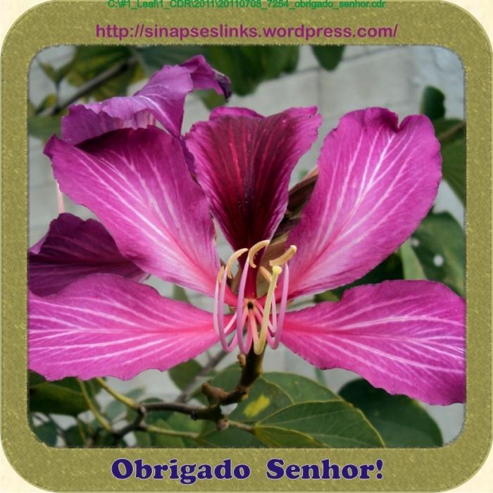 20110708_7254_obrigado_senhor