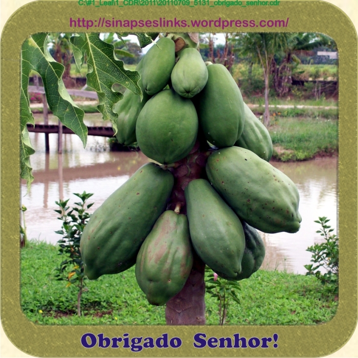 20110709_5131_obrigado_senhor