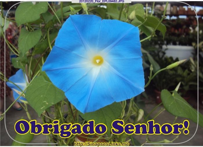 20120220_Flor_EPL09482