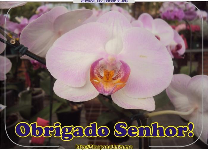 20120225_Flor_DSC00166