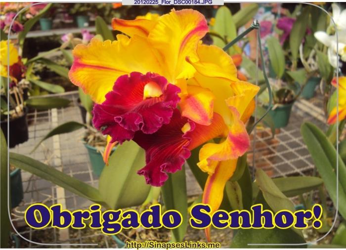 20120225_Flor_DSC00184