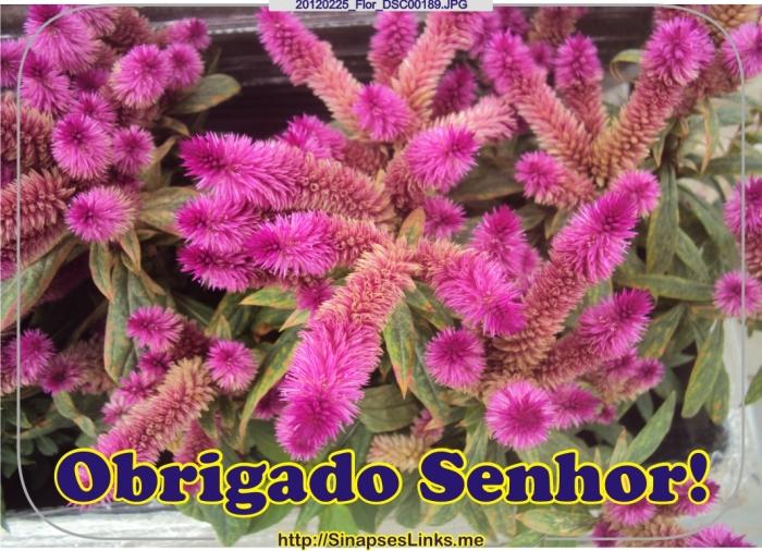 20120225_Flor_DSC00189