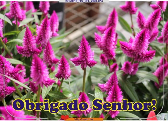 20120616_Flor_EPL_2693
