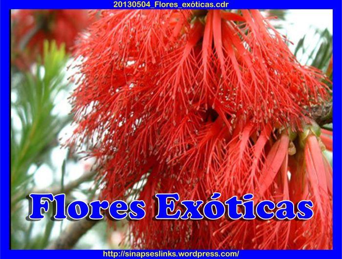20130504_Flores_exóticas