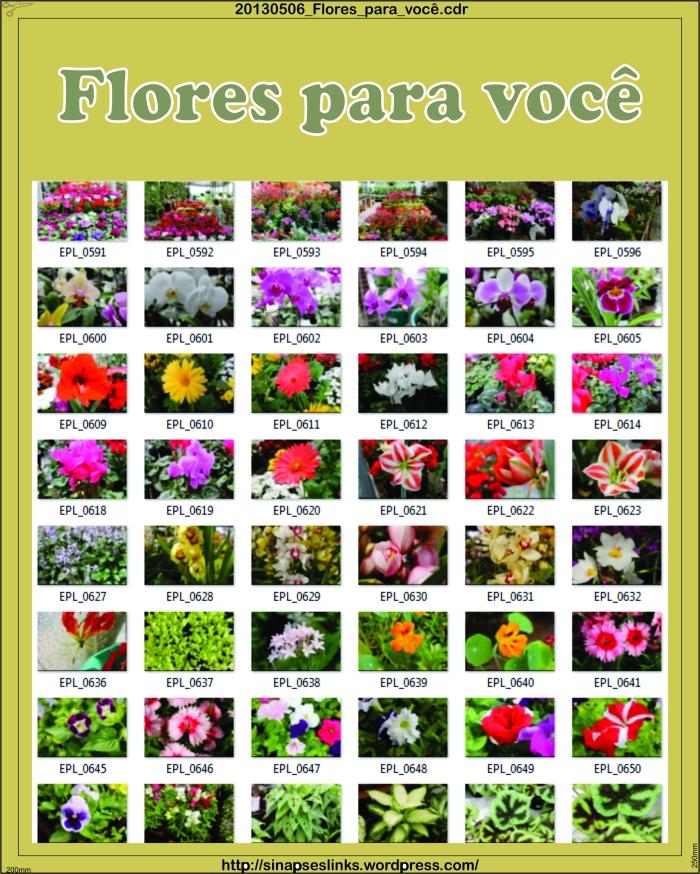 20130506_Flores_para_você