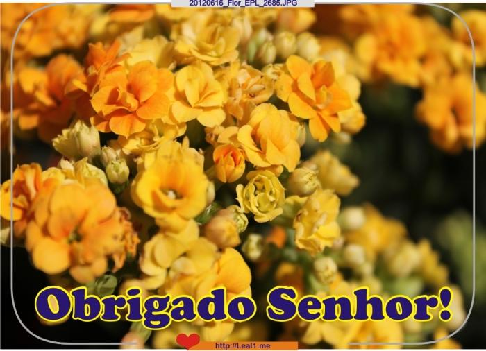 Drwn_20120616_Flor_EPL_2685