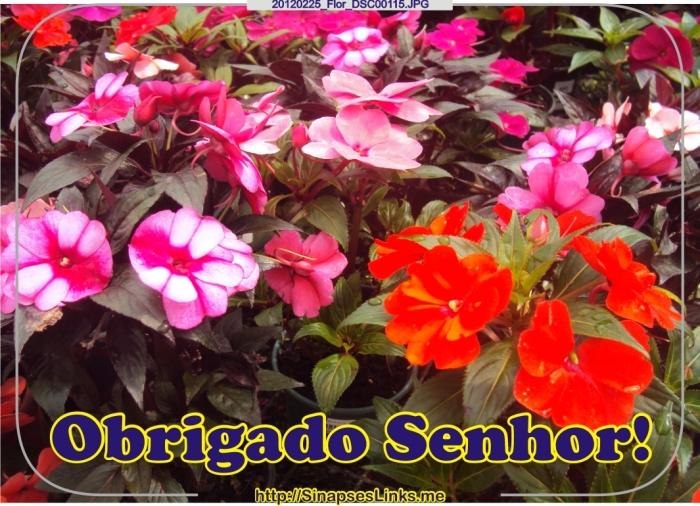 MbXt_20120225_Flor_DSC00115
