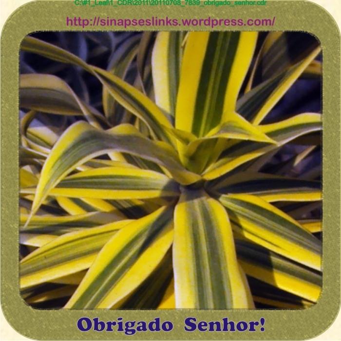 20110708_7839_obrigado_senhor