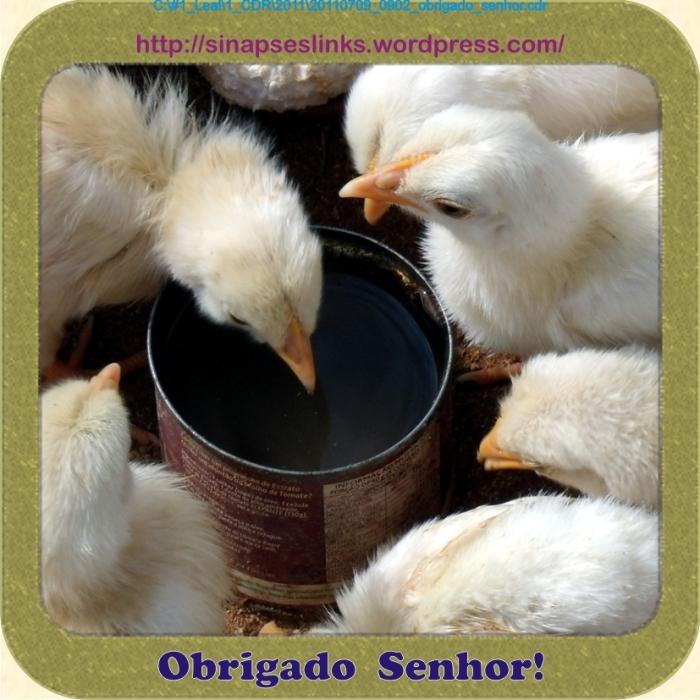 20110709_0902_obrigado_senhor