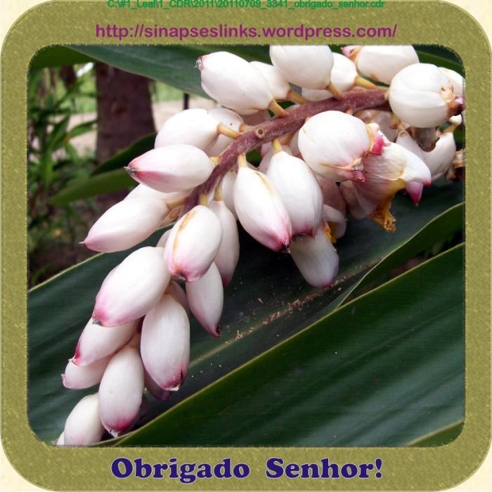 20110709_3341_obrigado_senhor