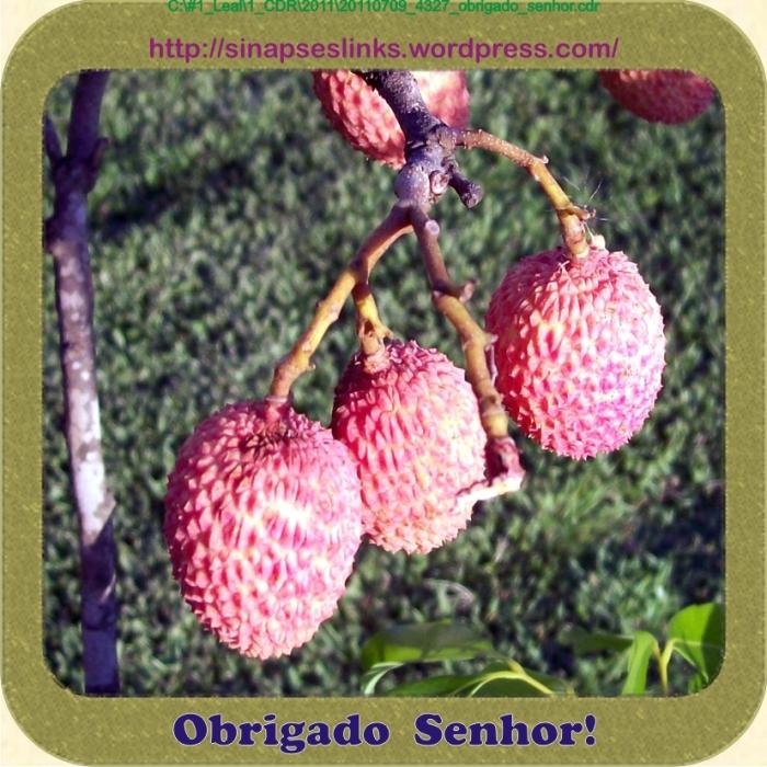 20110709_4327_obrigado_senhor