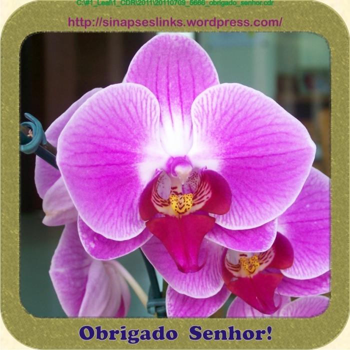 20110709_5666_obrigado_senhor