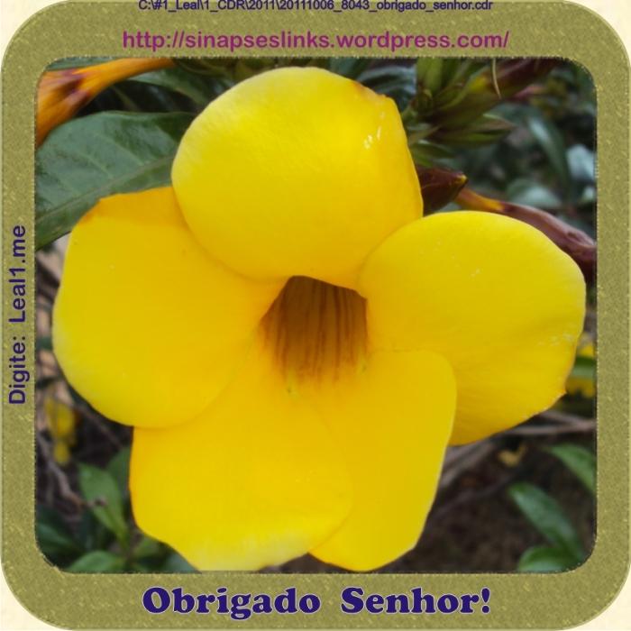 20111006_8043_obrigado_senhor