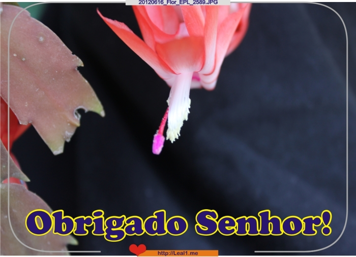 20120616_Flor_EPL_2589