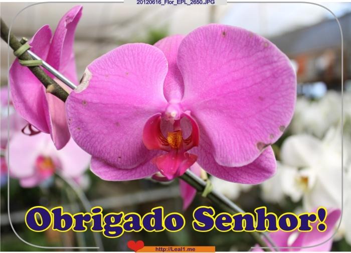 20120616_Flor_EPL_2650