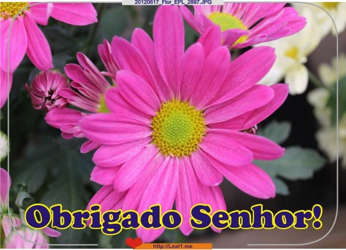 20120617_Flor_EPL_2897