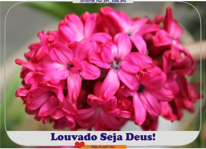 20120726_Flor_EPL_4256
