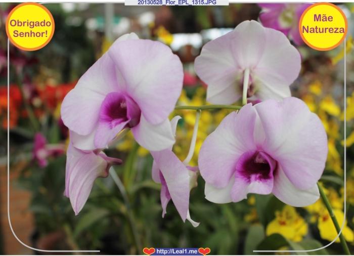 20130528_Flor_EPL_1315