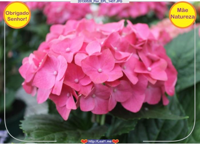 20130528_Flor_EPL_1407