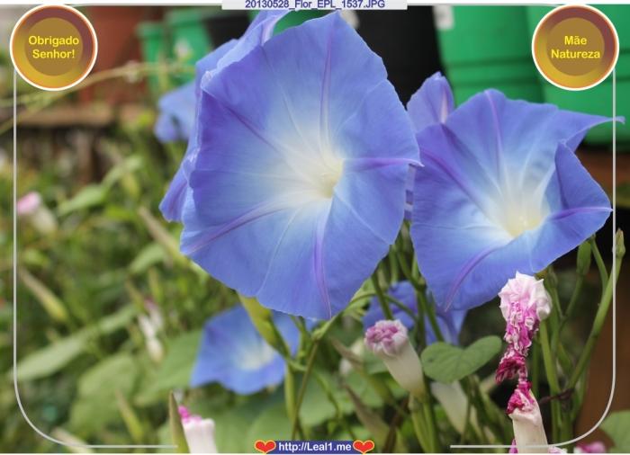20130528_Flor_EPL_1537