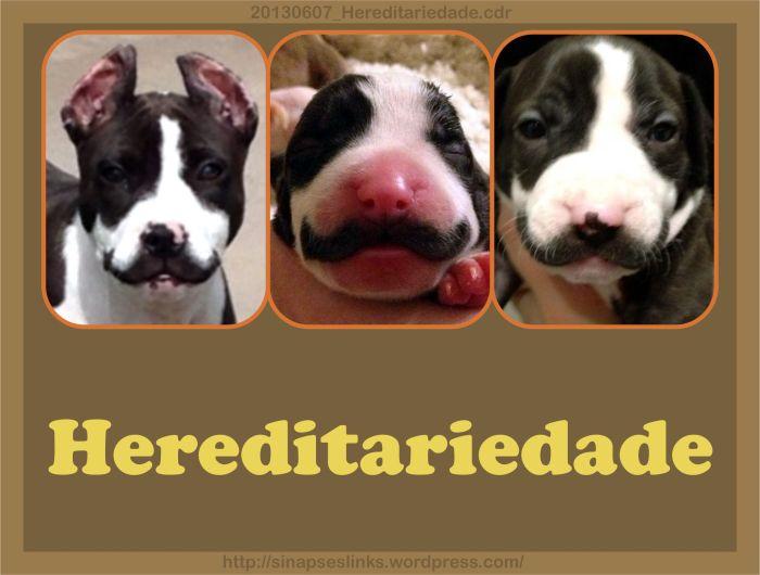 20130607_Hereditariedade