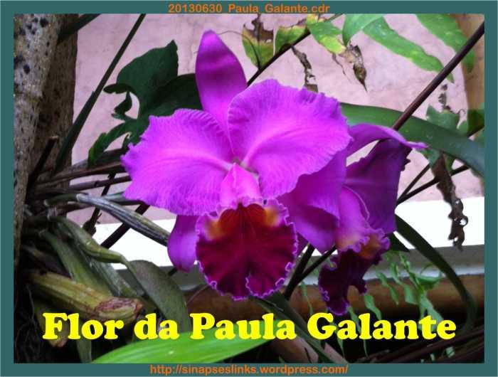 20130630_Paula_Galante