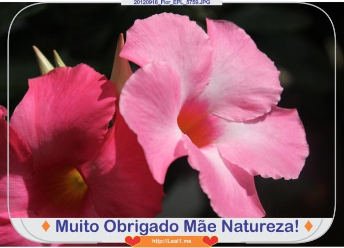 Bnxf_20120918_Flor_EPL_5759