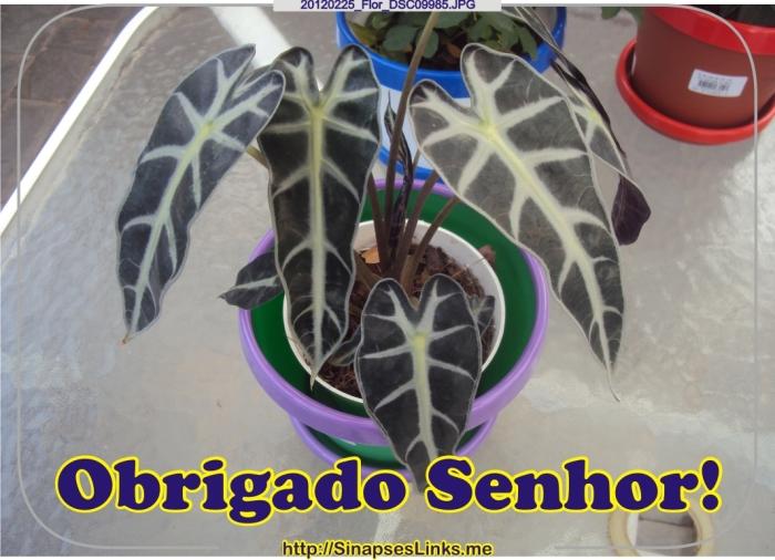 DFba_20120225_Flor_DSC09985
