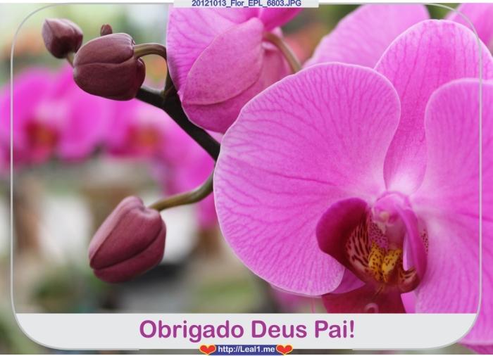 Fbio_20121013_Flor_EPL_6803