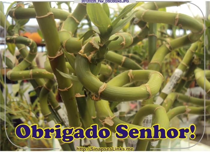 hopW_20120225_Flor_DSC00243