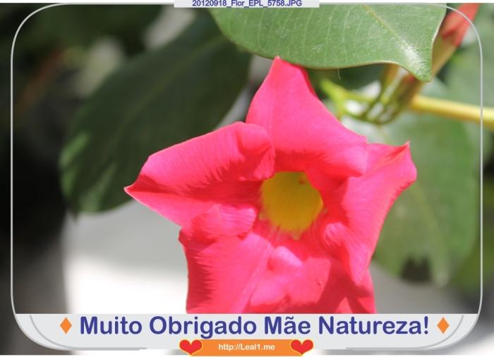 lTcf_20120918_Flor_EPL_5758