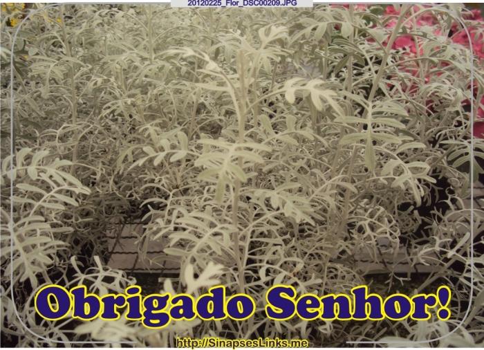 MboR_20120225_Flor_DSC00209
