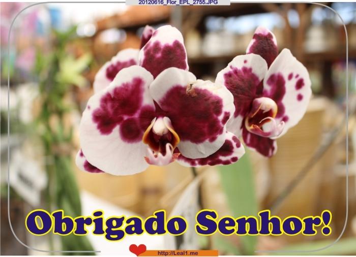 vVwc_20120616_Flor_EPL_2755