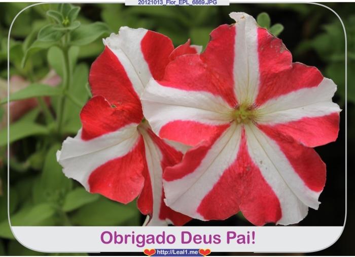 wnPc_20121013_Flor_EPL_6869