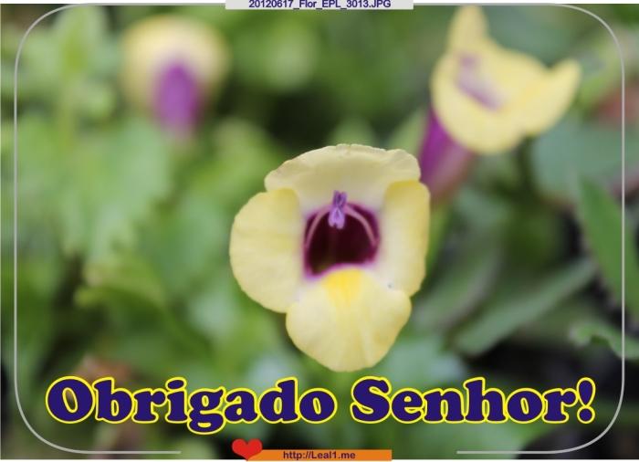 XLrZ_20120617_Flor_EPL_3013
